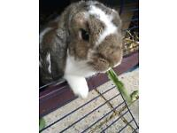 House Rabbits for a good home
