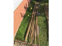 Large bundle of 8 foot bamboo canes