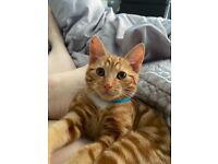 6m old male kitten