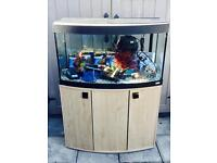 Fluval 3ft Bow Front Aquarium Fish Tank Full Tropical Setup
