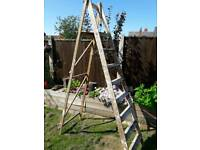 Tall Wooden ladders