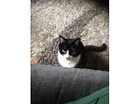 *** reward for missing cat***