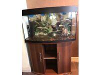 Large fish tank & stand