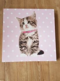 NEXT FLUFFY KITTEN WITH STUD COLLAR PICTURE IN GREAT CONDITION