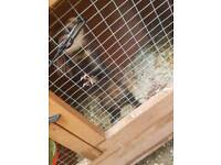 1 ferret and accessories