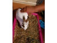 Rabbit 6 month old
