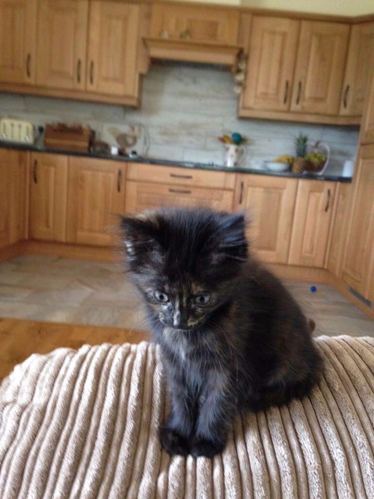 Friendly kitten