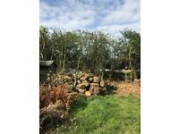 Loads of logs for FREE collection ASAP take as many as you like..