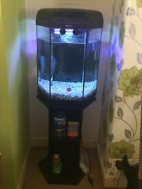 Full set up fish tank