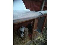 2 female rabbits, hutch and accessories