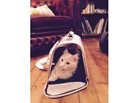 Cat/Pet Carrier - Transport Bag