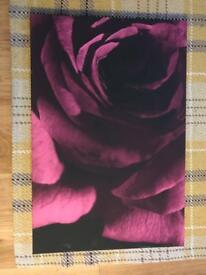 Rose Canvas Picture