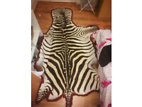Genuine zebra skin rug from South Africa