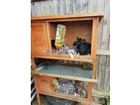 Rabbits and hutches £60