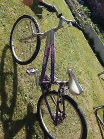 Purple bike