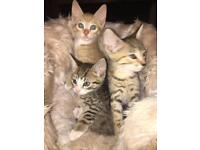 6 kittens up for sale