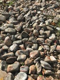 200-300 Large Pebble stones for garden for free