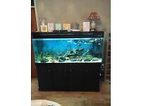 Massive 600L fish tank with accessories (cichlids)