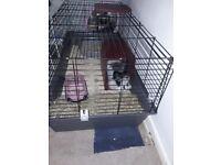 Indoor rabbit cage (still new)