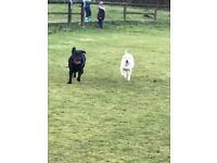 Dog walking, pet care.