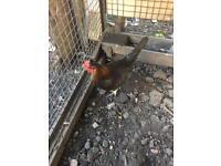 Chicken for sale.