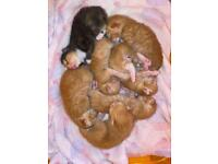 Litter of 7 beautiful kittens **ALL RESERVED**