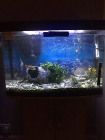 64 litre tank with 10 tropical fish and all equipment Value is £750