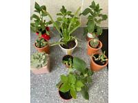 10 plants cactus aloe Vera petunias