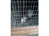 Lovely Little boy polecat and hutch