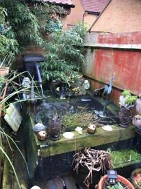 Large fish pond full set up with lots of fish