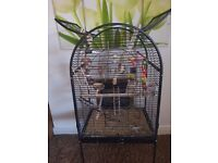 2 cockatiels with large cage for sale