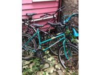 Free bikes!!