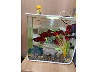 Complete Bioorb 30L smart tank and fish