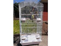 Budgies, toys and cage for unbeatable price