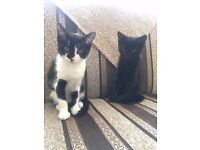 2 Kittens, 3 months old ready to go to a new home