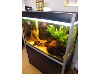 Tropical Fish and Fluval Profile 1000 Aquarium - Black (275L) 15841 with various accessories.