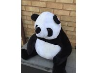 Big fluffy panda fir sale in Gloucester