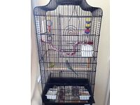 2 Budgies, 1 large cage and 5 toys.