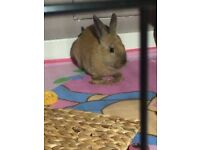 female rabbit needing a new home!