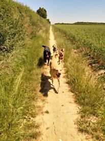 Part Time Dog Walker Luton Area Required