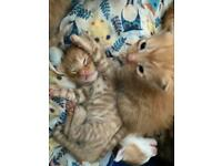 Kittens - All now reserved