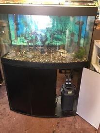 3ft bow front aquarium