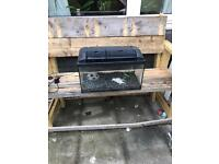 2ft fish tank setup