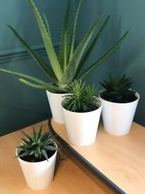 🪴 House plants set of 4🪴