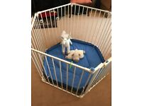 lindam playpen with Blue mat . Excellent condition.