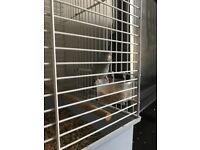Parrot cage etc