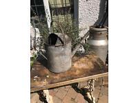 vintage galvanised watering can garden pot planter wedding prop