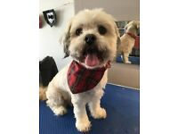 Experienced qualified dog grooming service