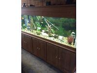 Fish tank an unit