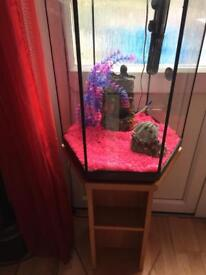 Large Hexagon fish tank and stand £100